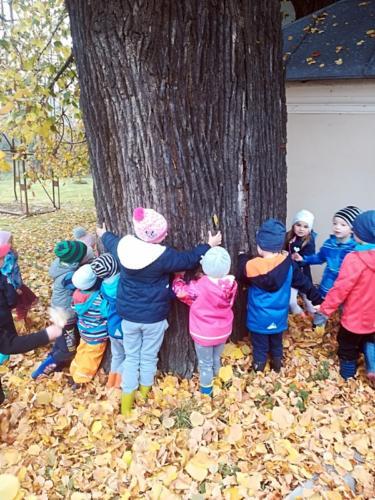 Den stromu