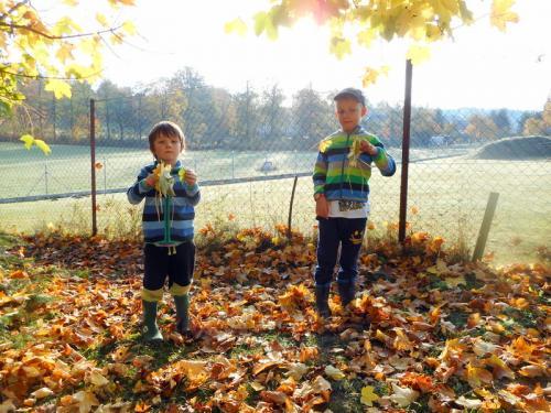 ekologie-stromoví skřítci (24)