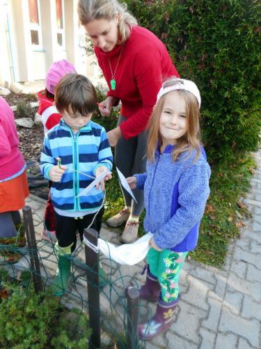 ekologie-stromoví skřítci (33)